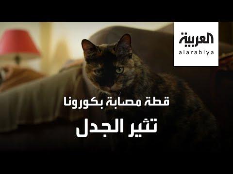 شاهد قطة تصاب بفيروس كورونا وتُثير الجدل في فرنسا