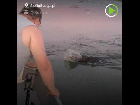 شاهد عائلة تنقذ دبا علق رأسه في وعاء بلاستيكي