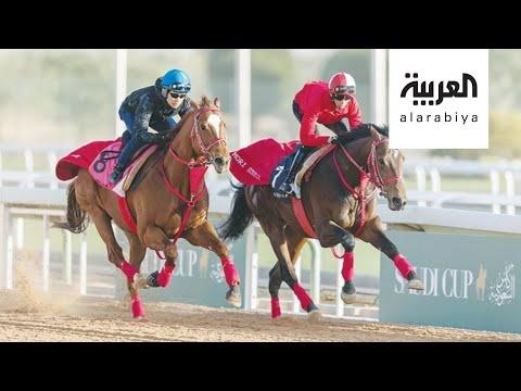 شاهد السعودية الأولى عالميا في إنتاج الخيول العربية الأصيلة