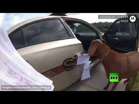 شاهد لقطات مضحكة لـماعز يداهم سيارة شرطة في الولايات المتحدة