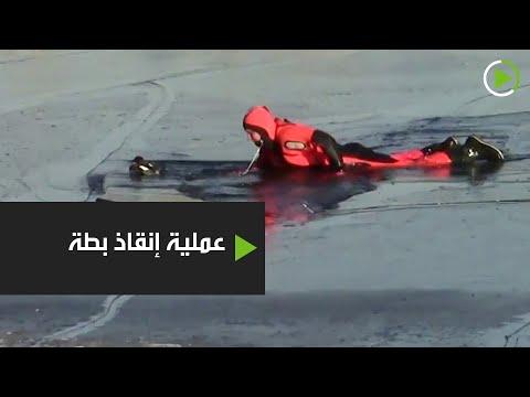 شاهد البطة العالقة في جليد موسكو